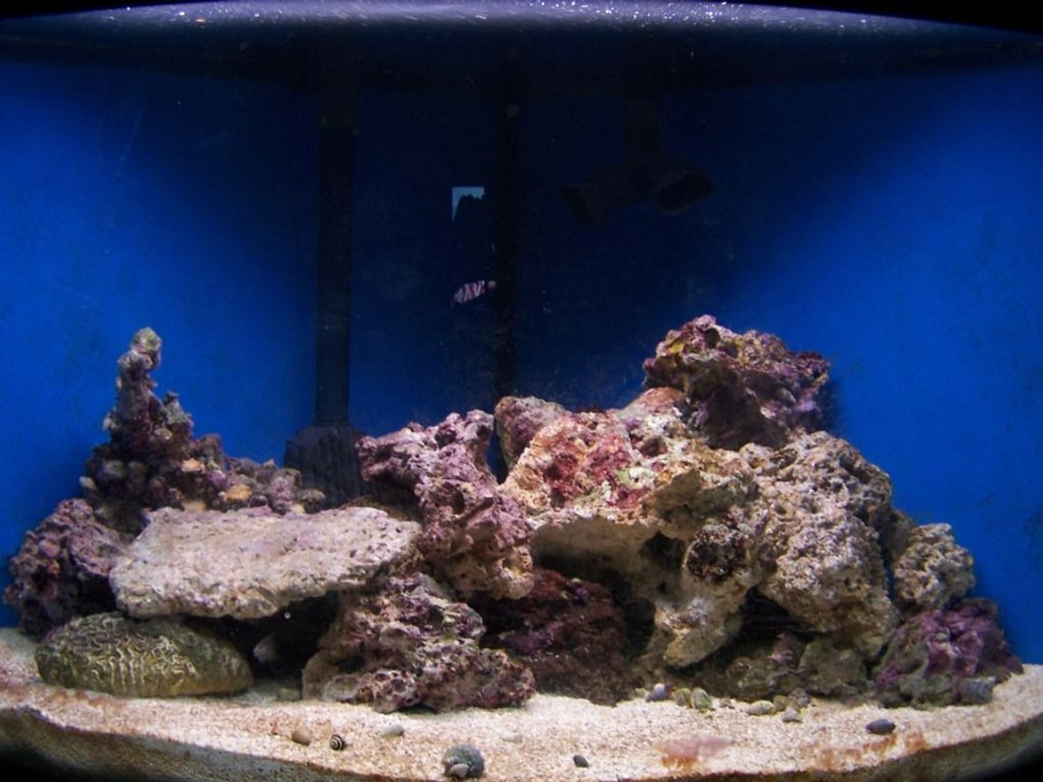 fish tank picture - 70 gal, crabs, snails, no skimmer, temporary light, 60 lbs rock, 80 lbs sand, no fish, running since aug 08