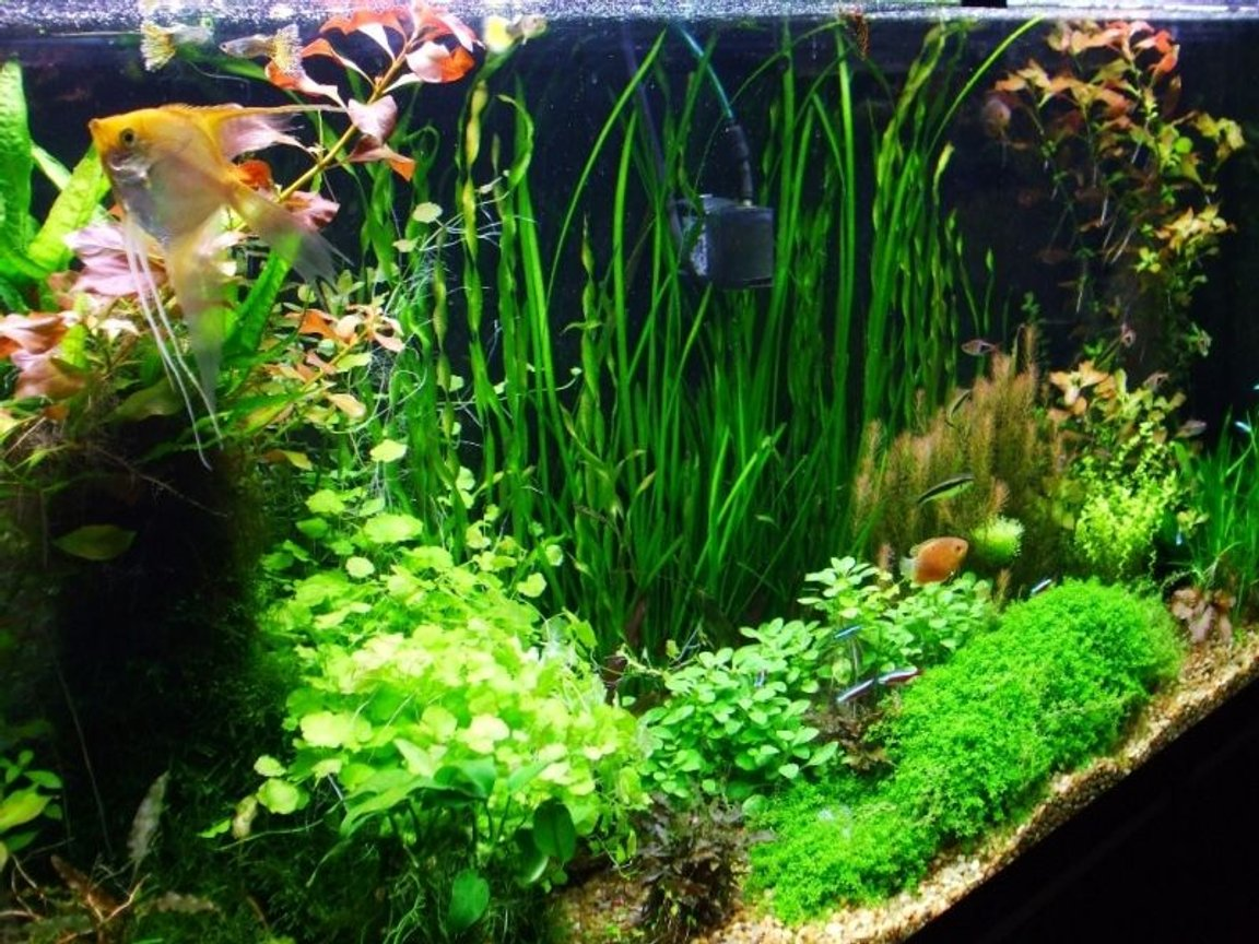 fish tank picture - image 2 of 77Gallon
