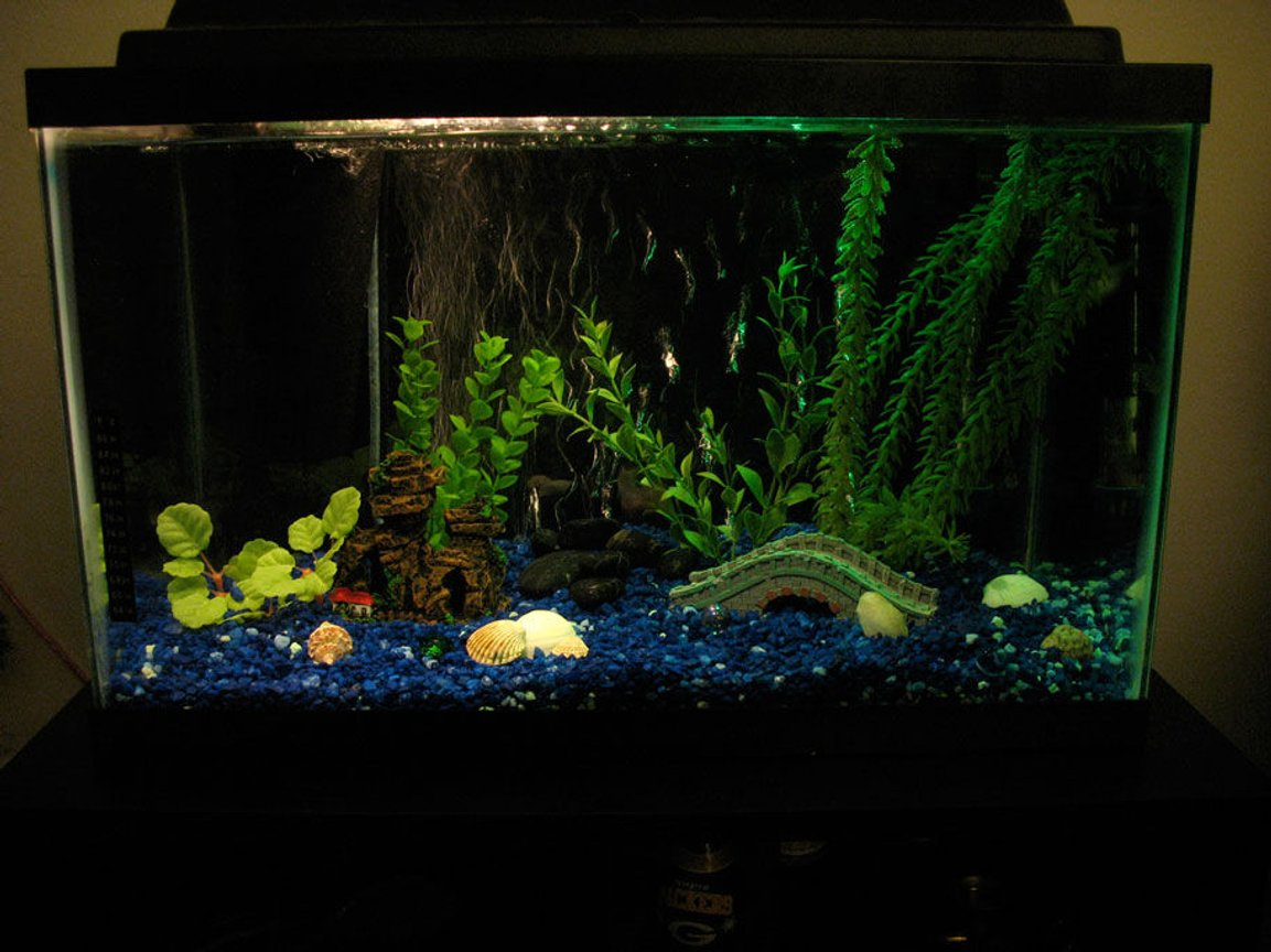 fish tank picture - full tnk 10g