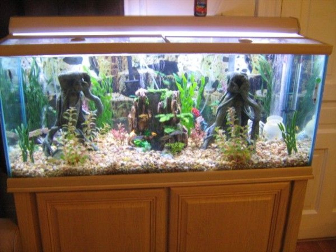 fish tank picture - Another Shot