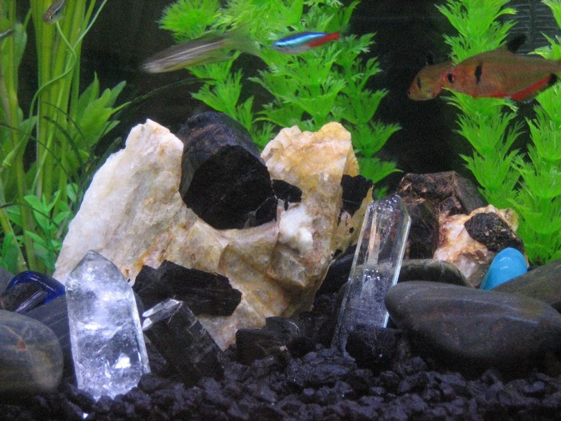 fish tank picture - There's crystals in them there waters!