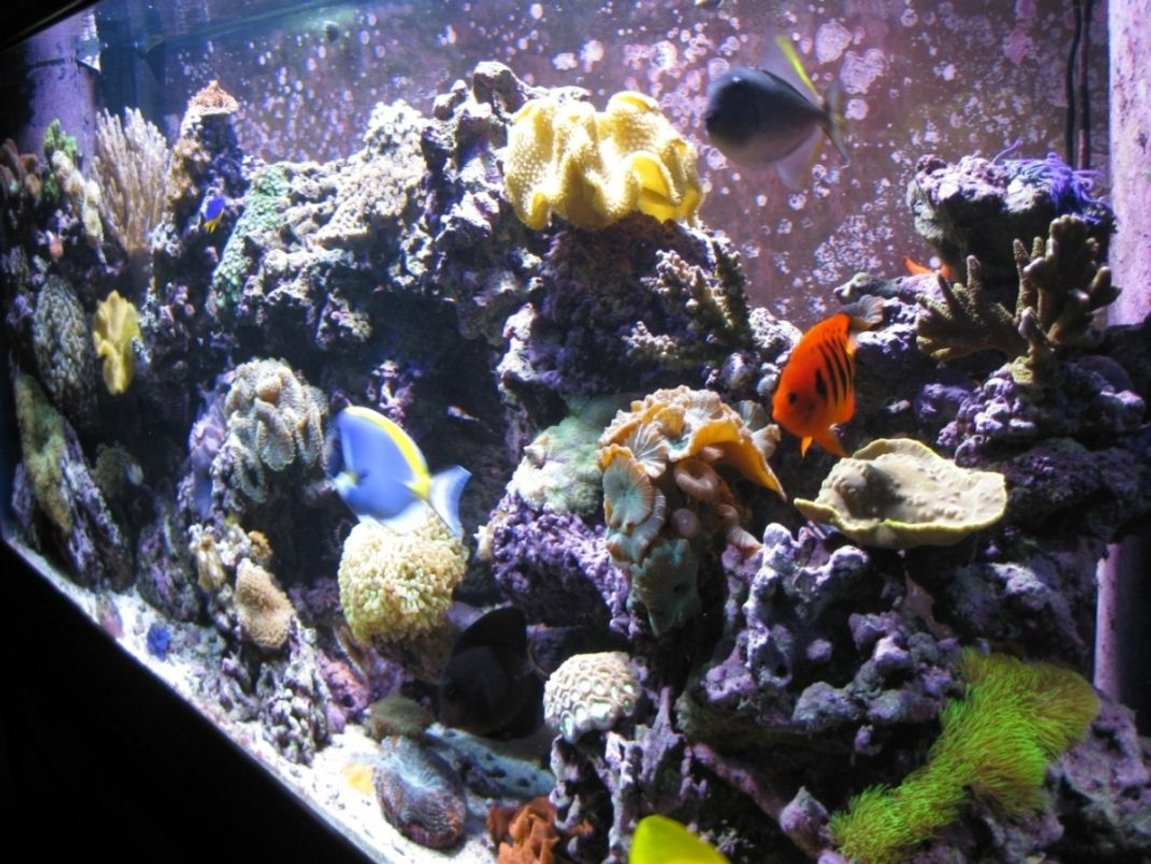 fish tank picture - Right Angle 120g Reef