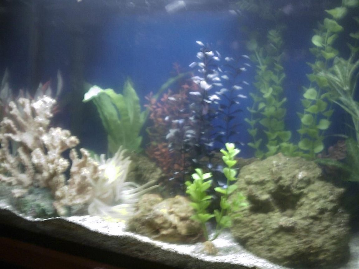 fish tank picture - Here is a photo of my aquarium as it currently is. I will be adding older photos as well as new ones with any significant additions.