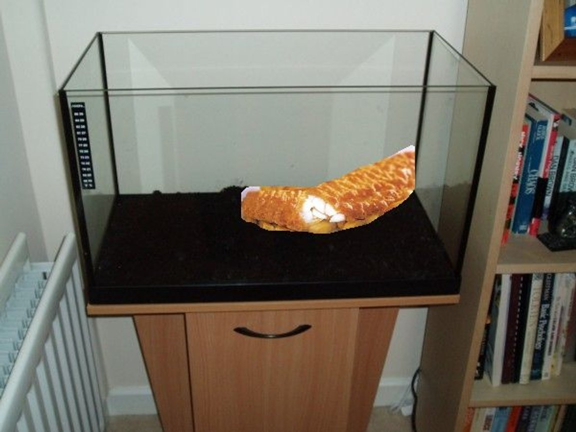 fish tank picture - Bobby my beloved COD fish