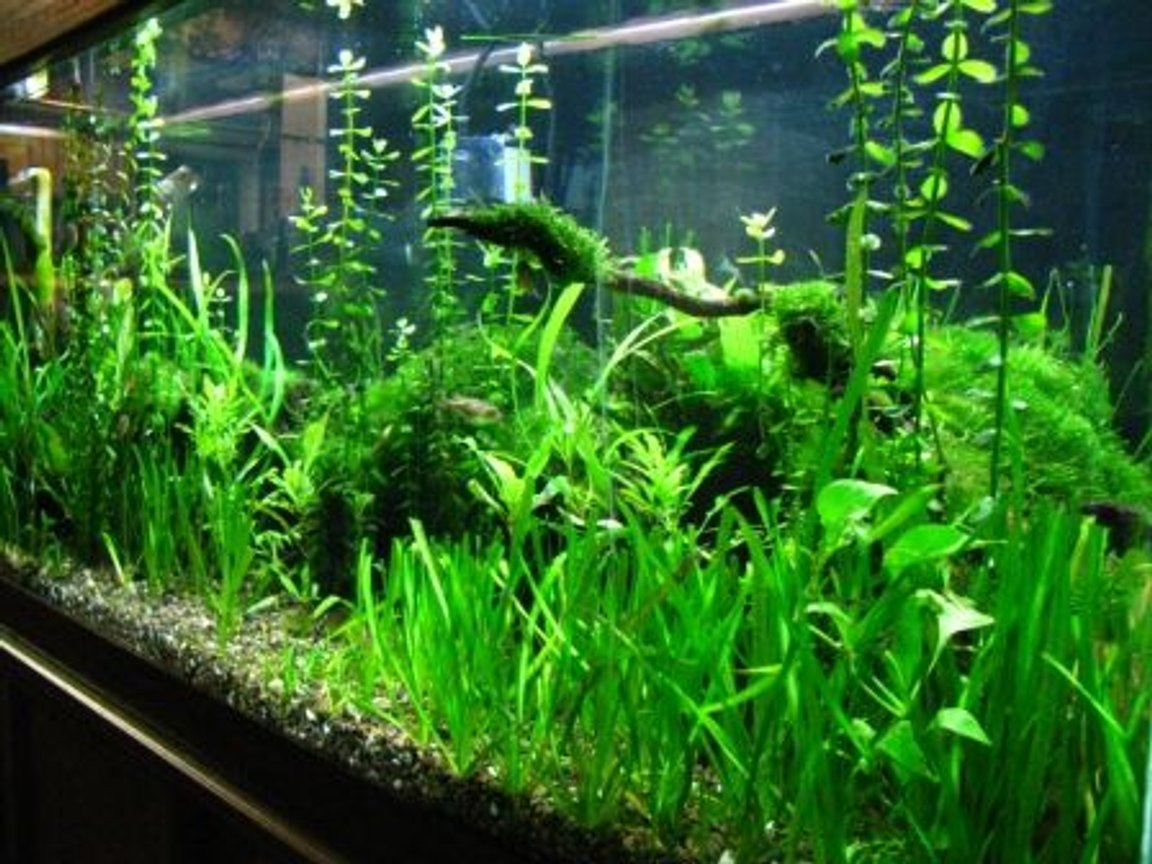 fish tank picture - long view