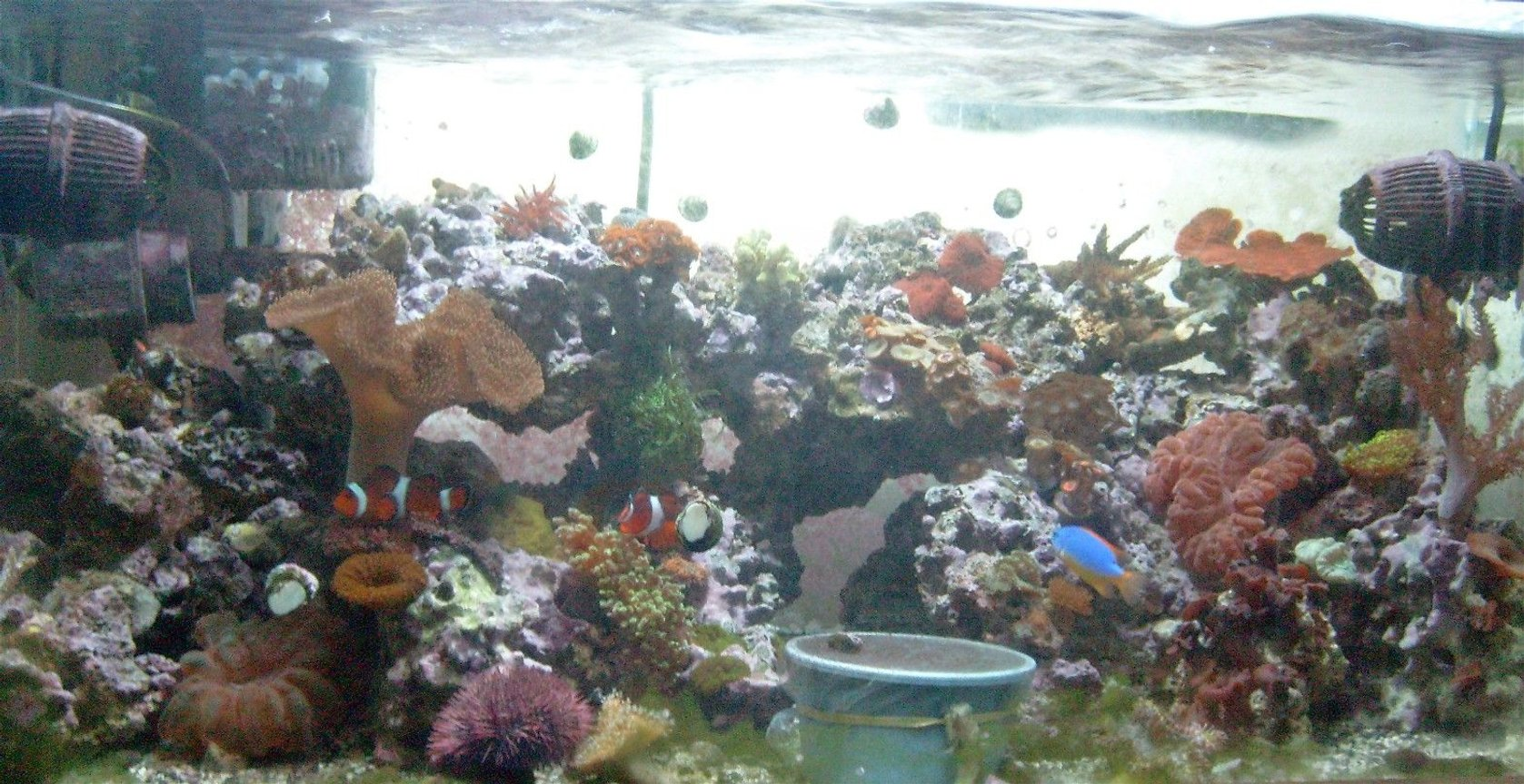 fish tank picture - 40 b