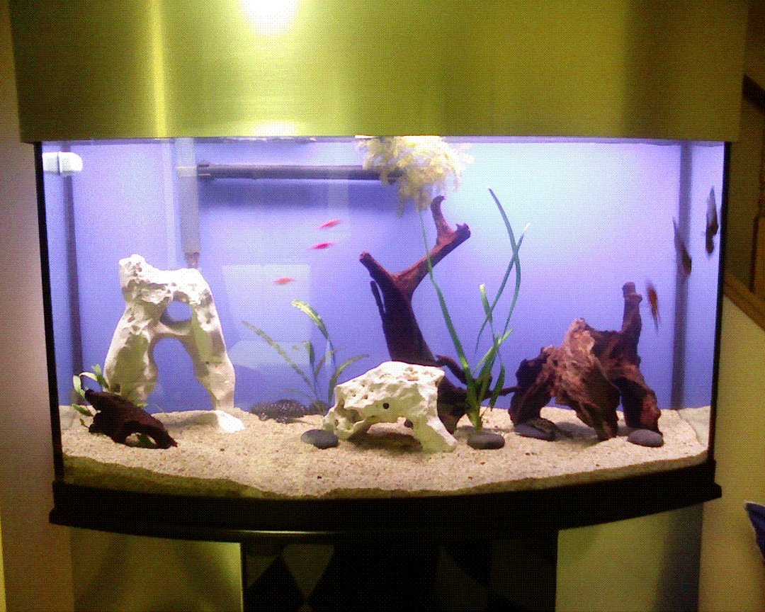 fish tank picture - new layout