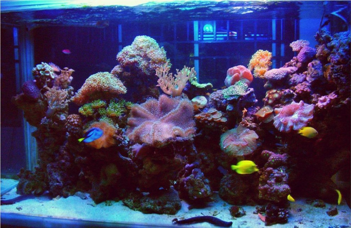fish tank picture - Marine Reef Display Tank 2 July2009