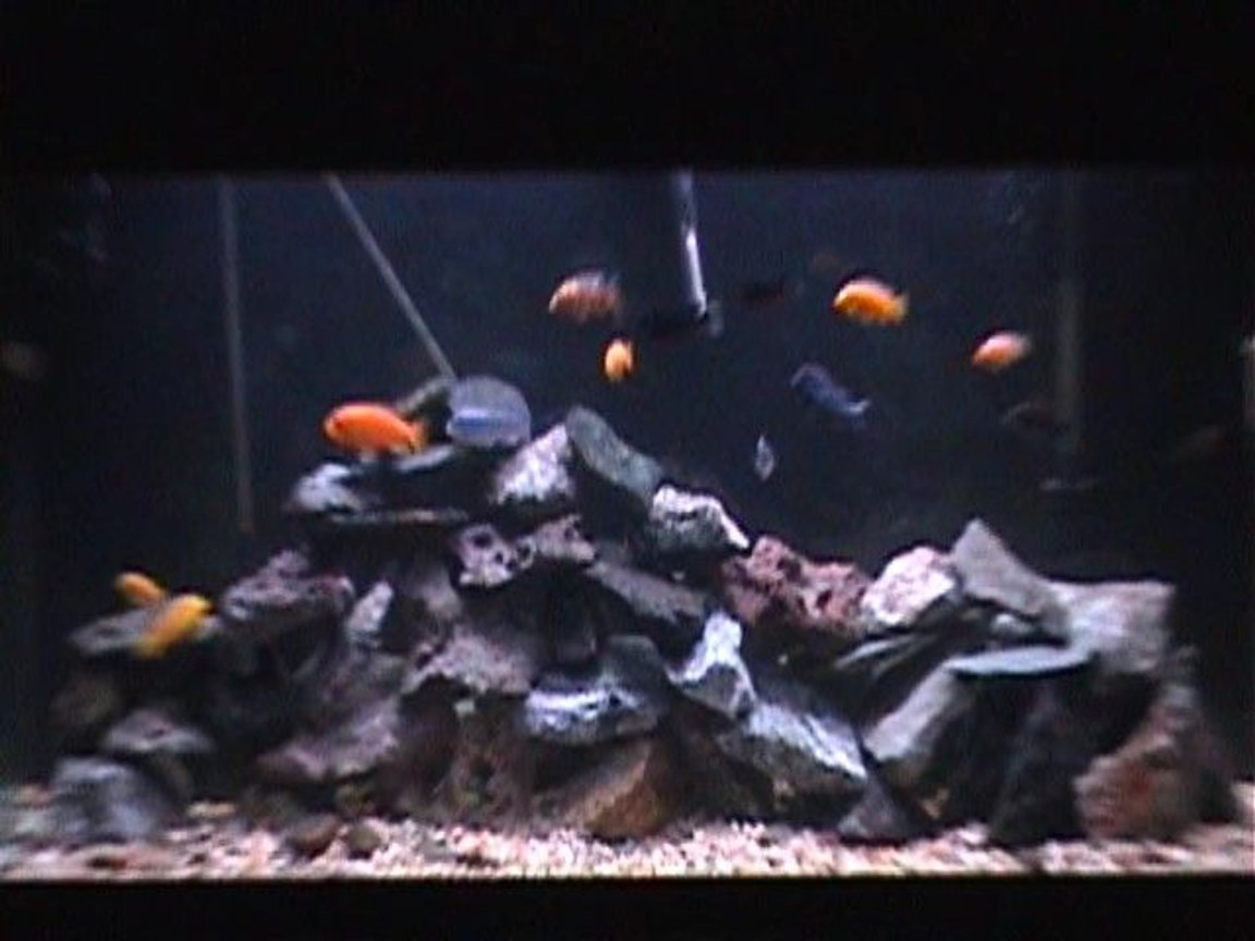 fish tank picture - Close up...