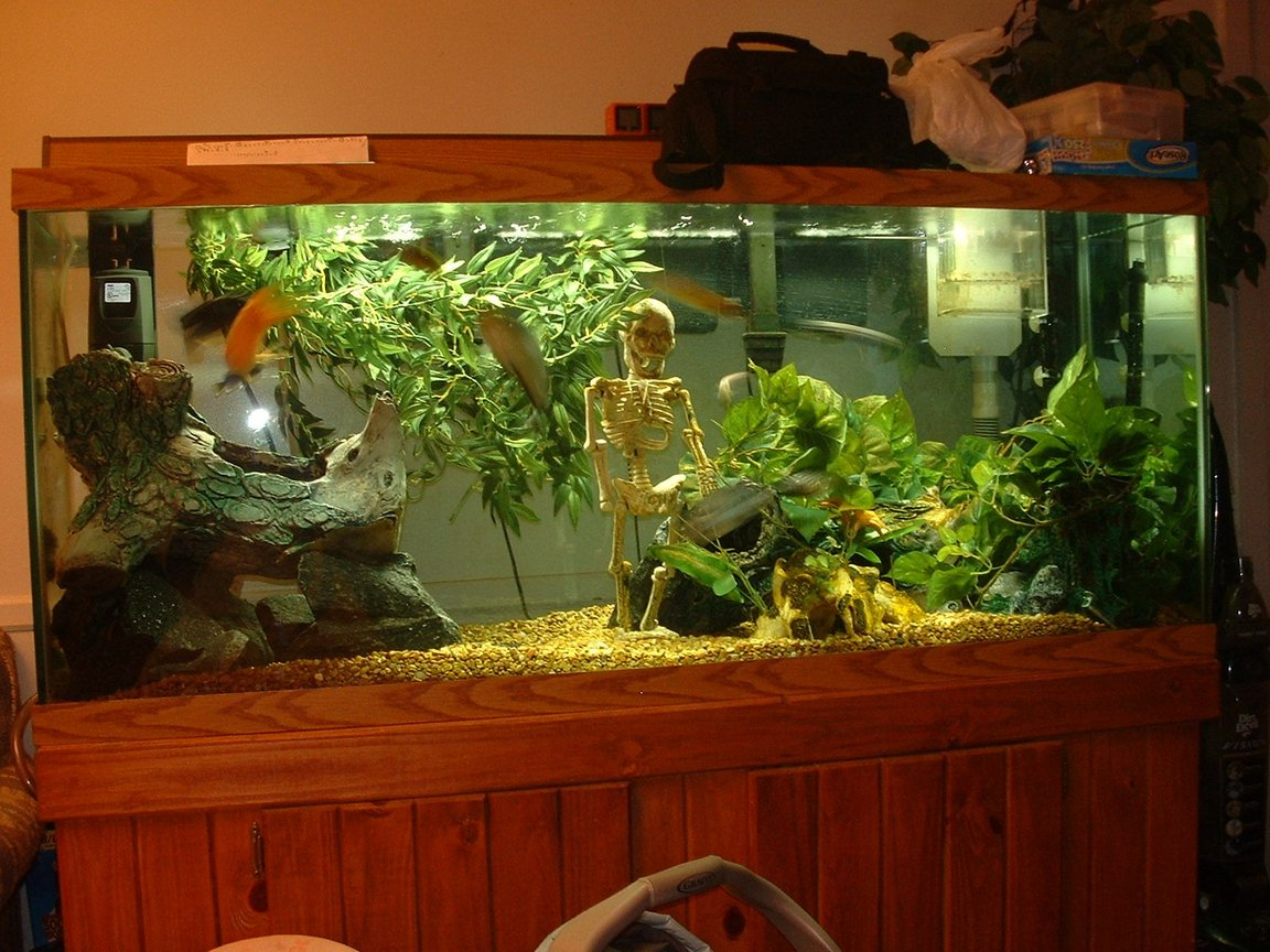 fish tank picture - tank pic