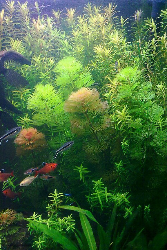 fish tank picture - forest