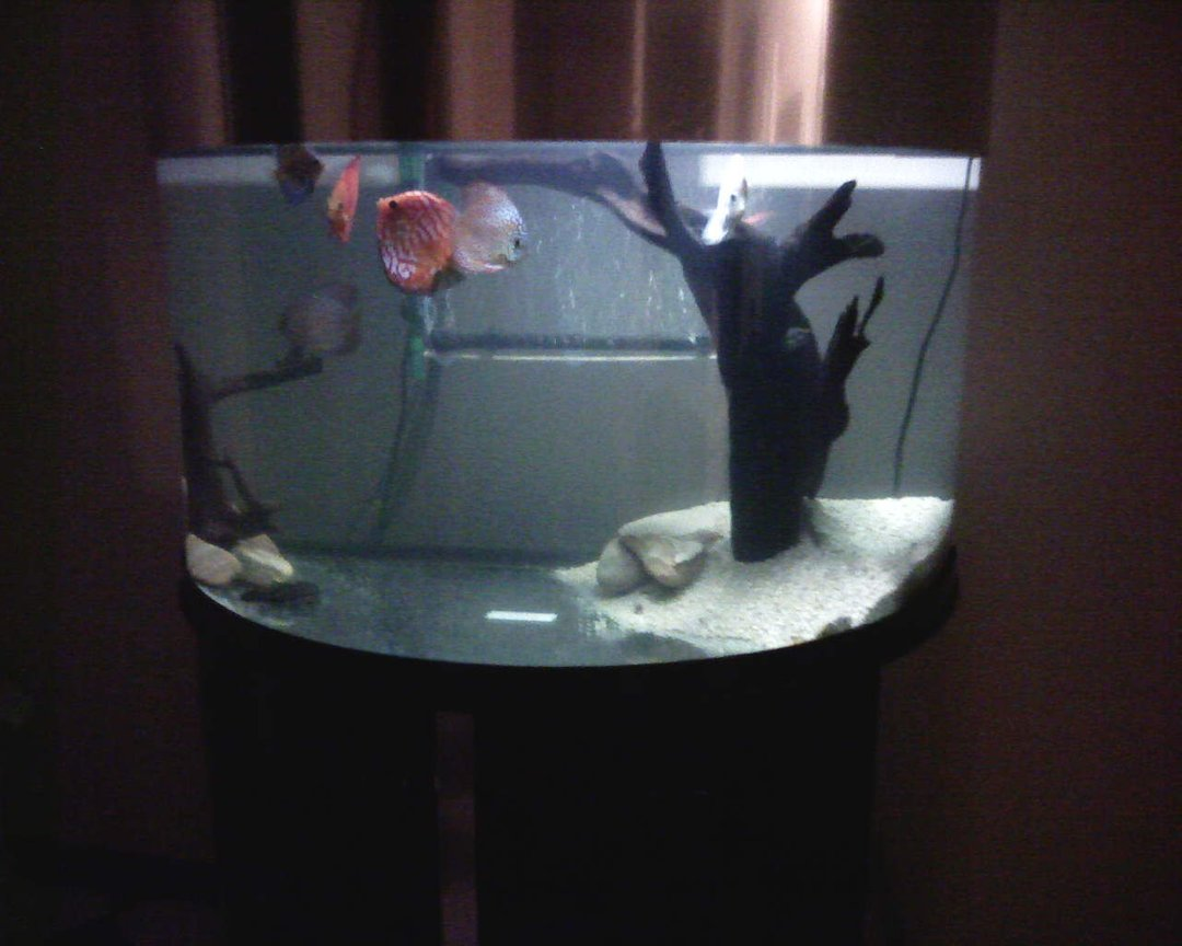 fish tank picture - old layout