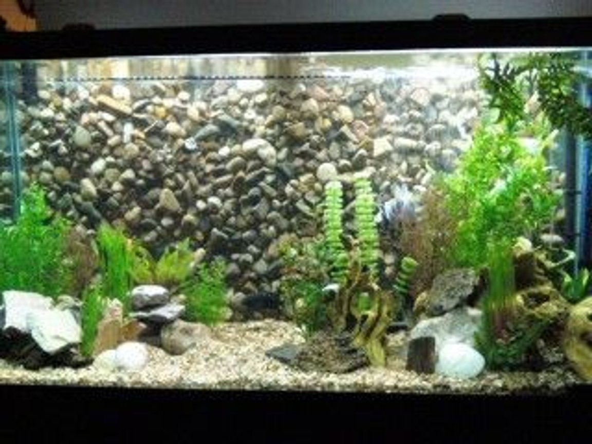 Photo 1 90 Gallon Nw Cichlid Tank With Diy 3d Background