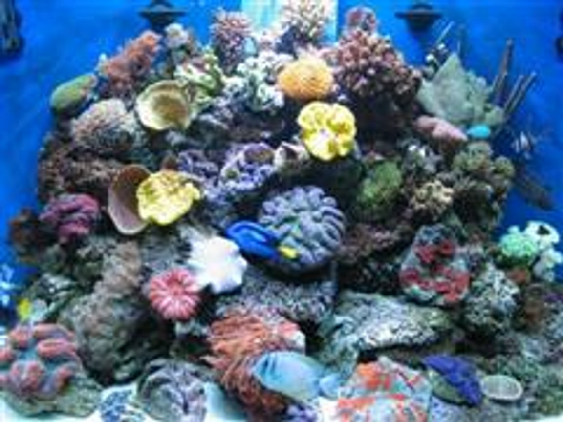 fish tank picture - mix-reef-2