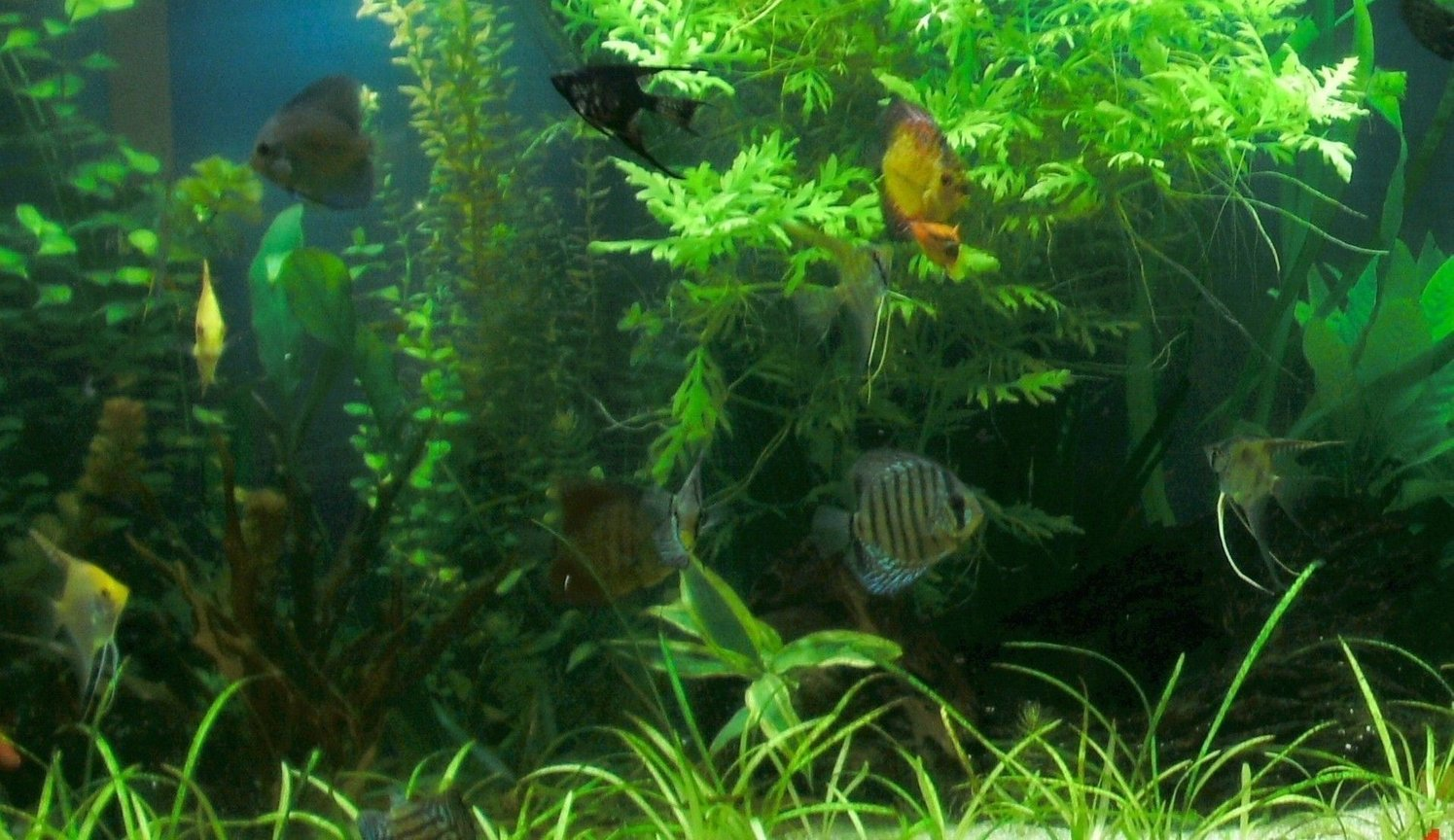 fish tank picture - Planted tank