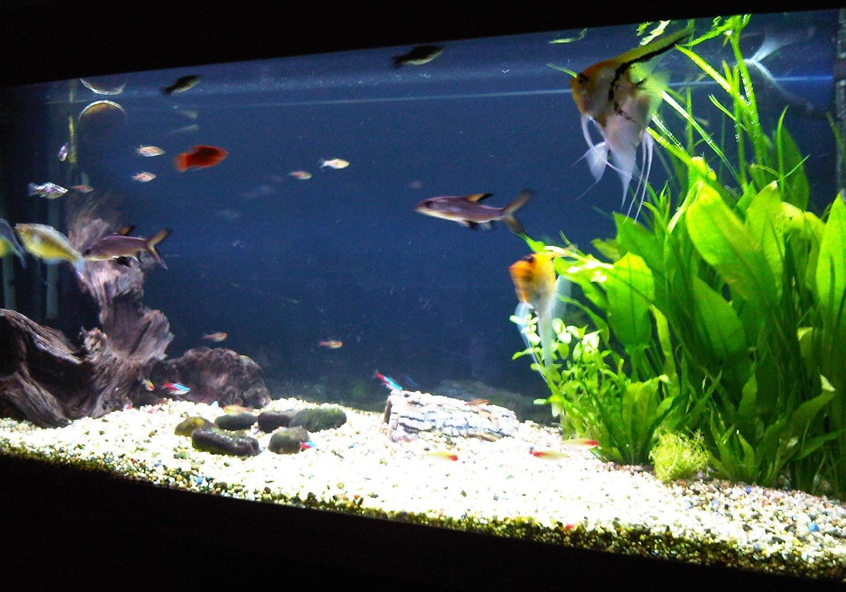 fish tank picture - Front Angled View