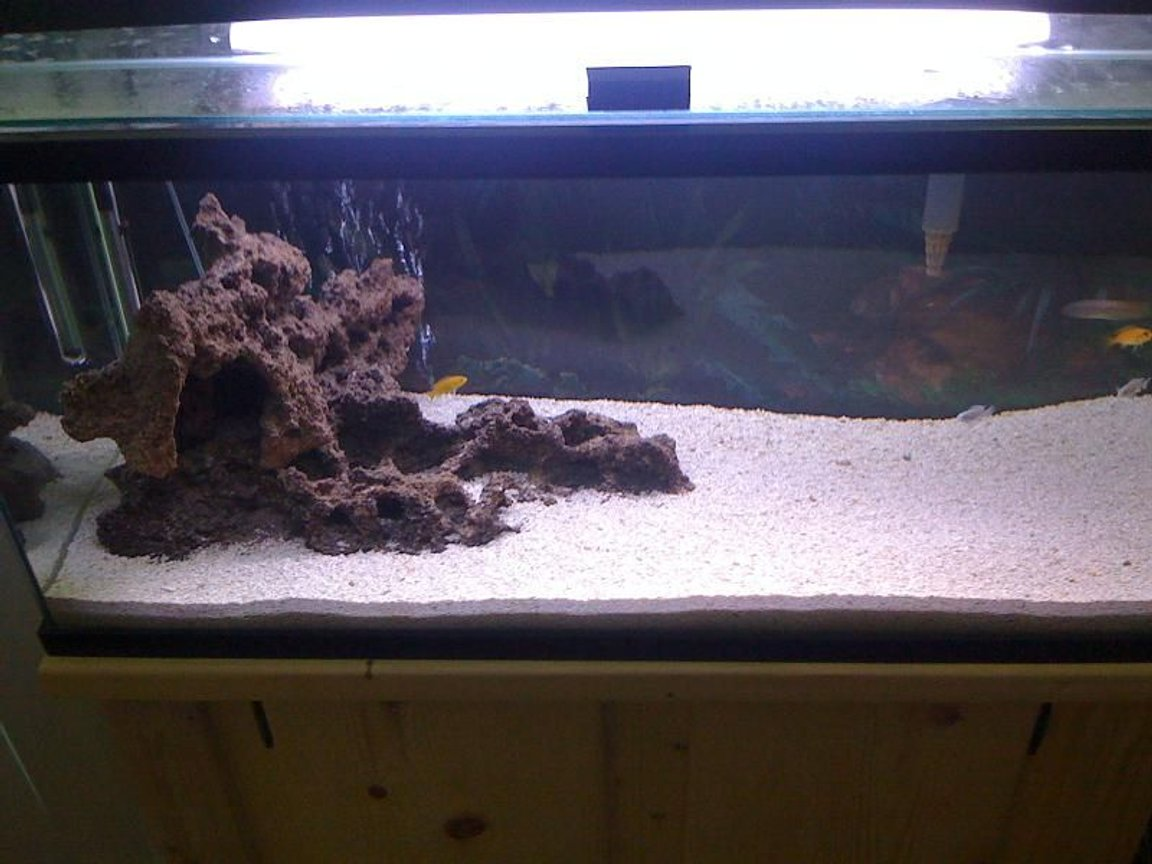 fish tank picture - The beginning stages