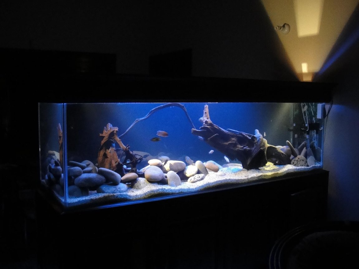 fish tank picture - ....