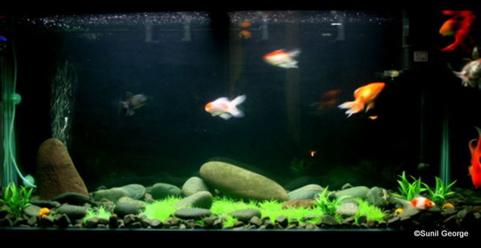fish tank picture - Additional Pics
