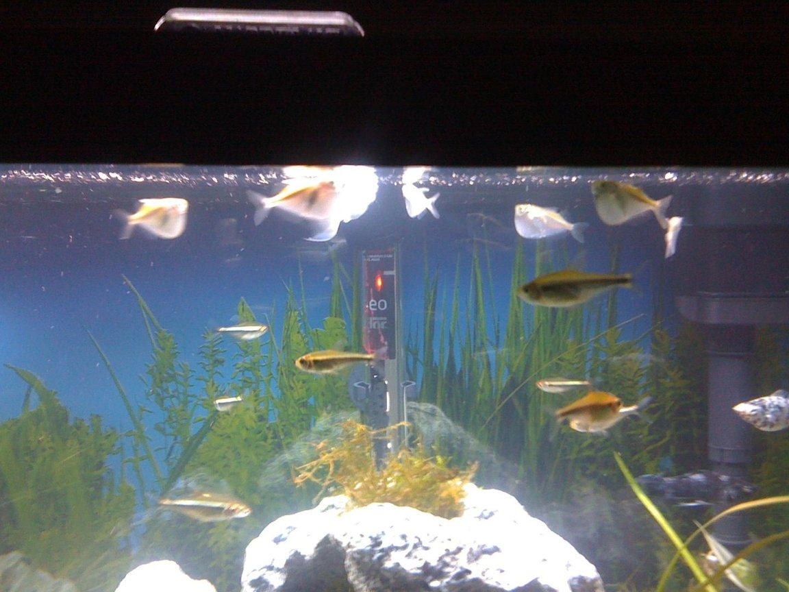 fish tank picture - Fish