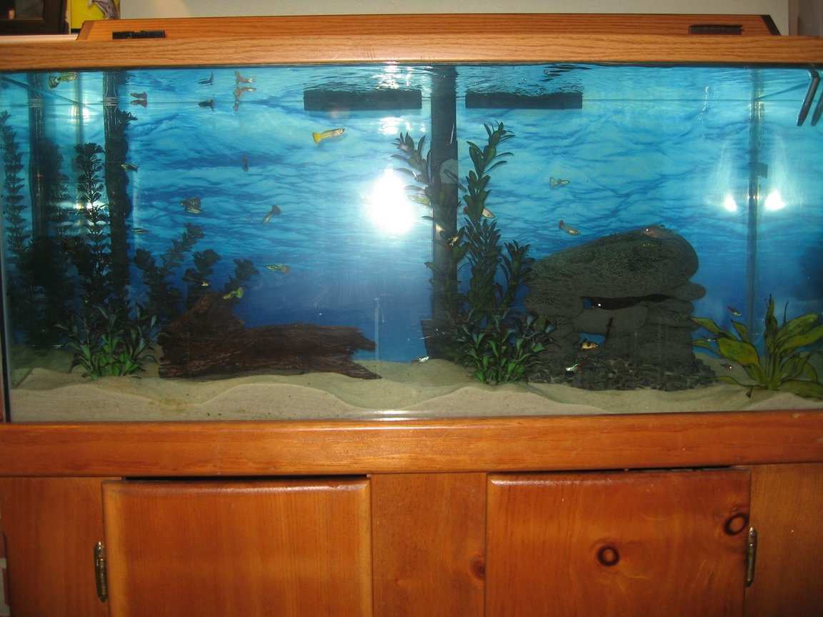 fish tank picture - Add