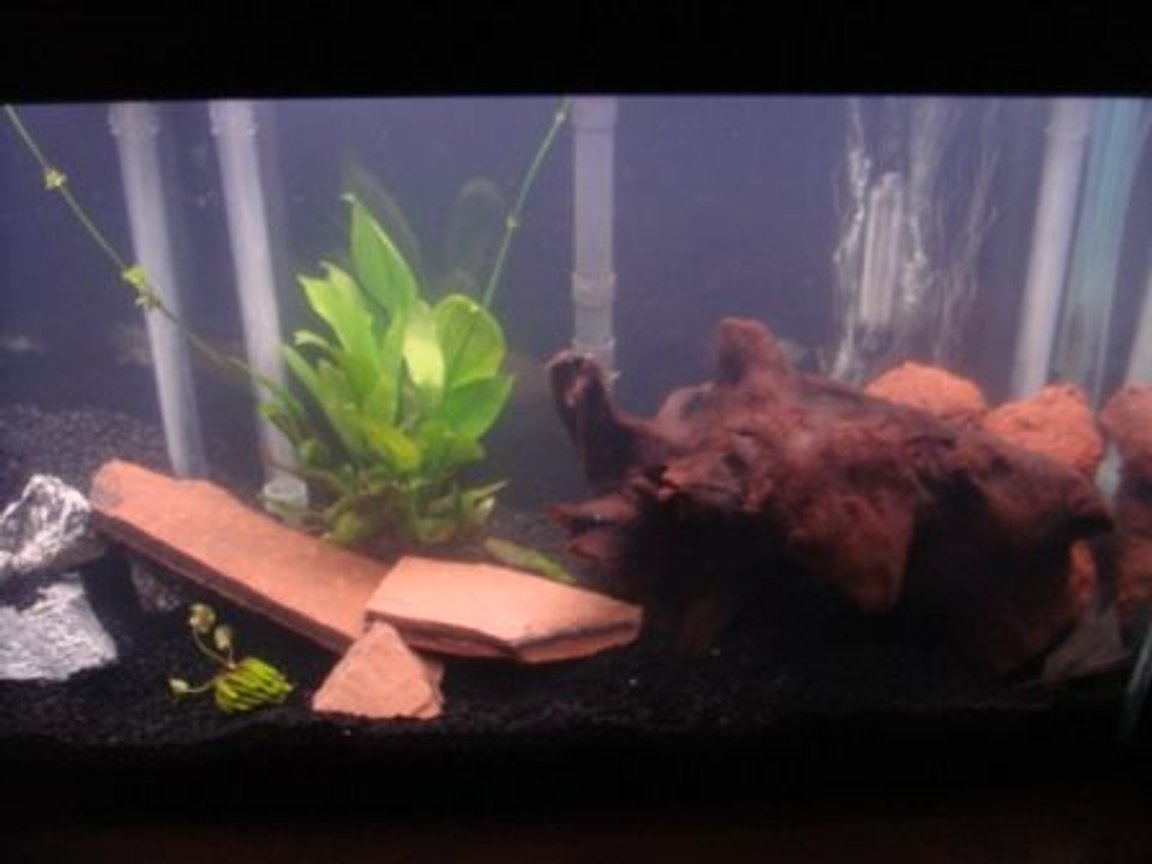 fish tank picture - right side