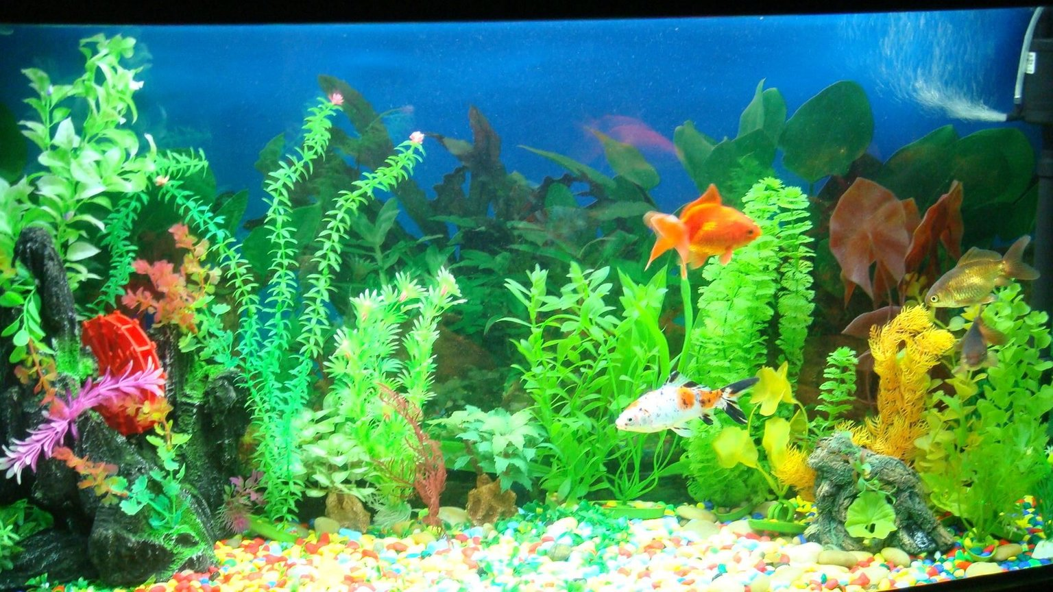 fish tank picture - front view