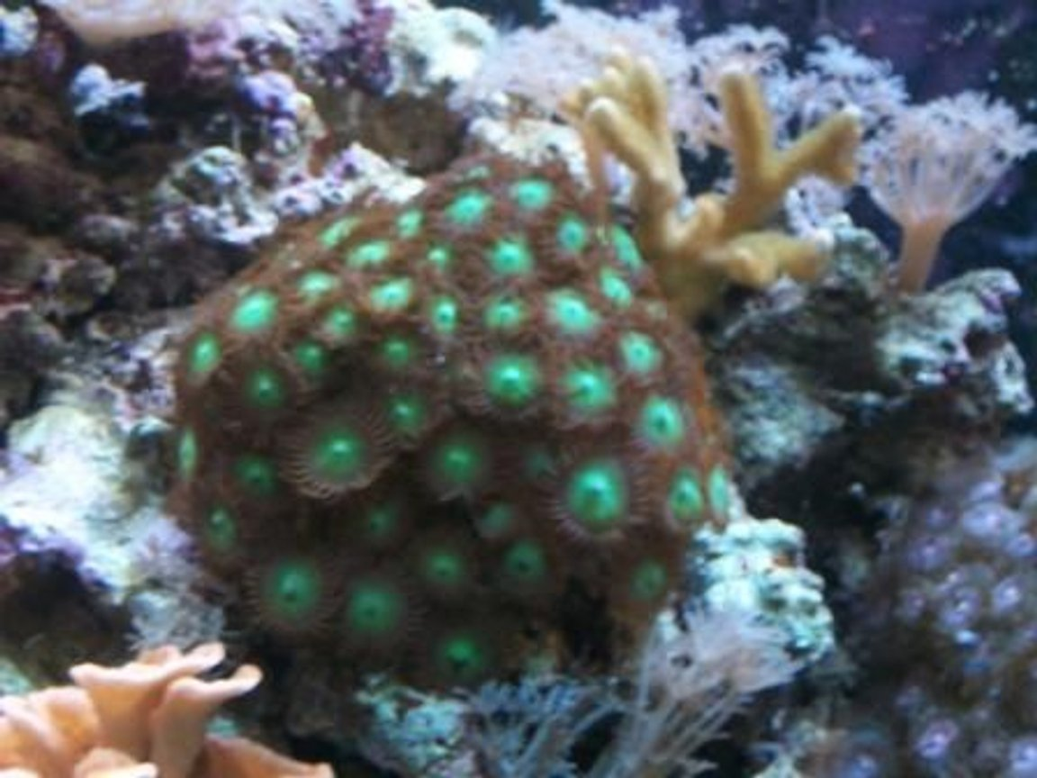 fish tank picture - polyps