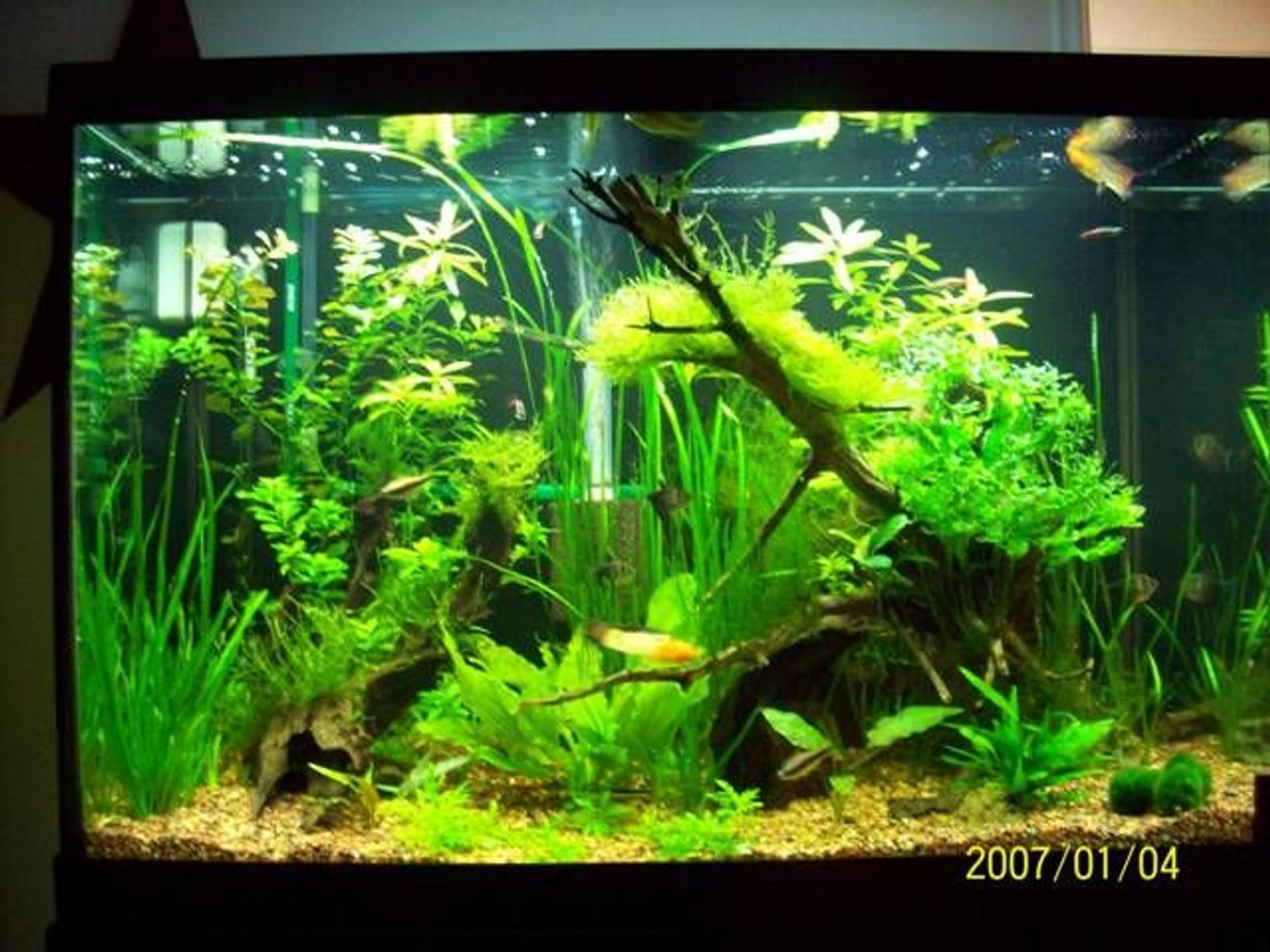 fish tank picture - and more again