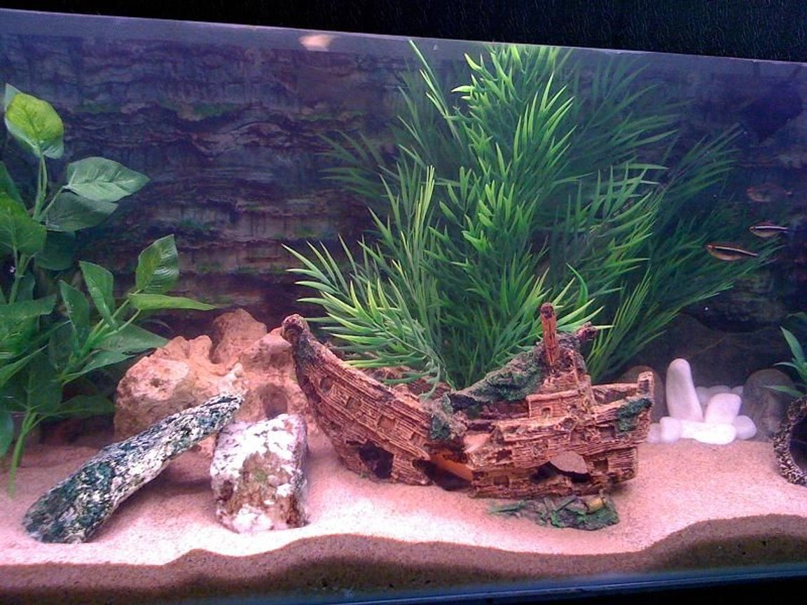 fish tank picture - More Tank