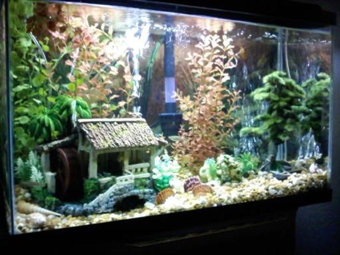 fish tank picture - all fake plants, rock, shells from beaches, fish, aquarium decoration.