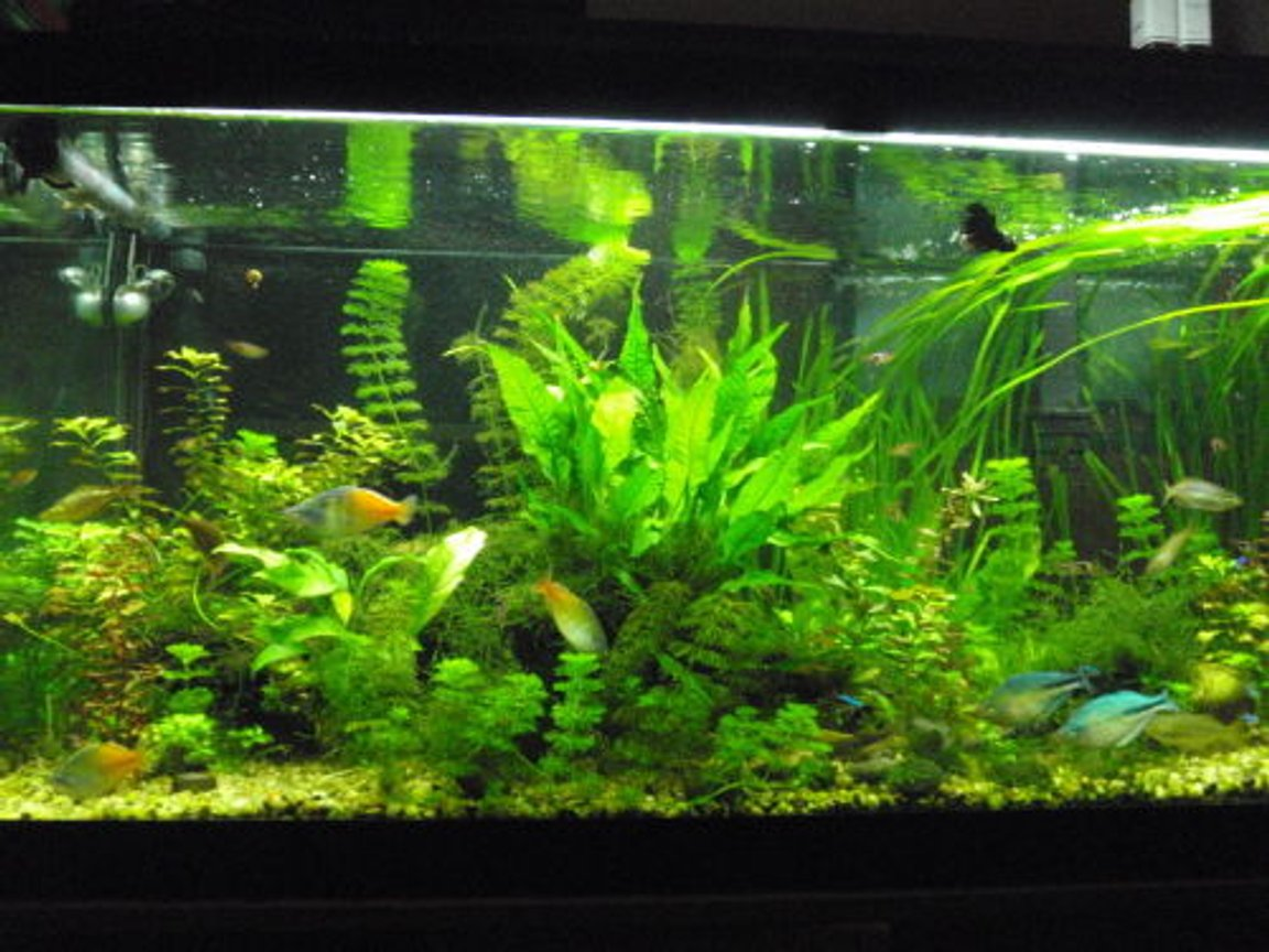 fish tank picture - my tank before recent changes.