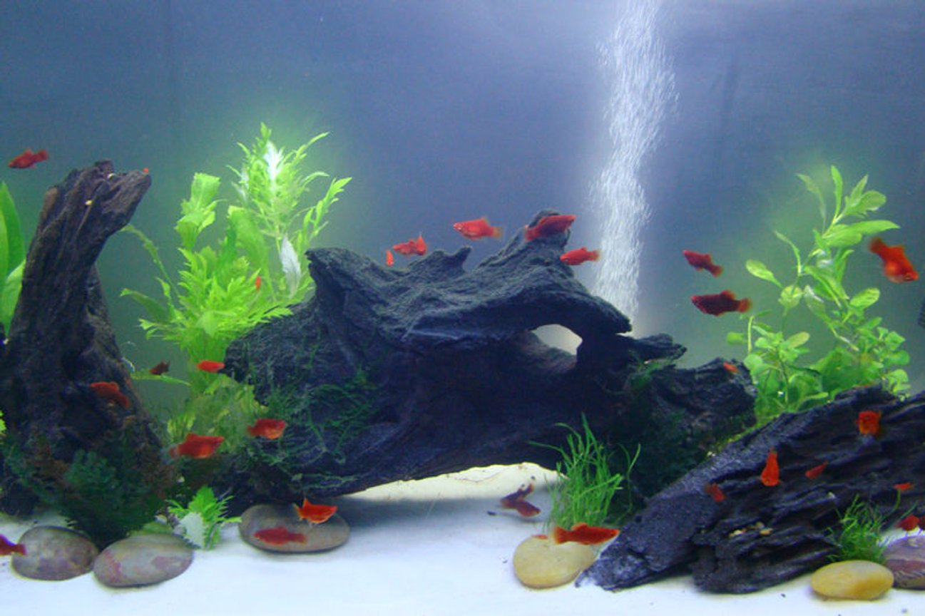 fish tank picture - My new 29 Gallon Tank May 2010