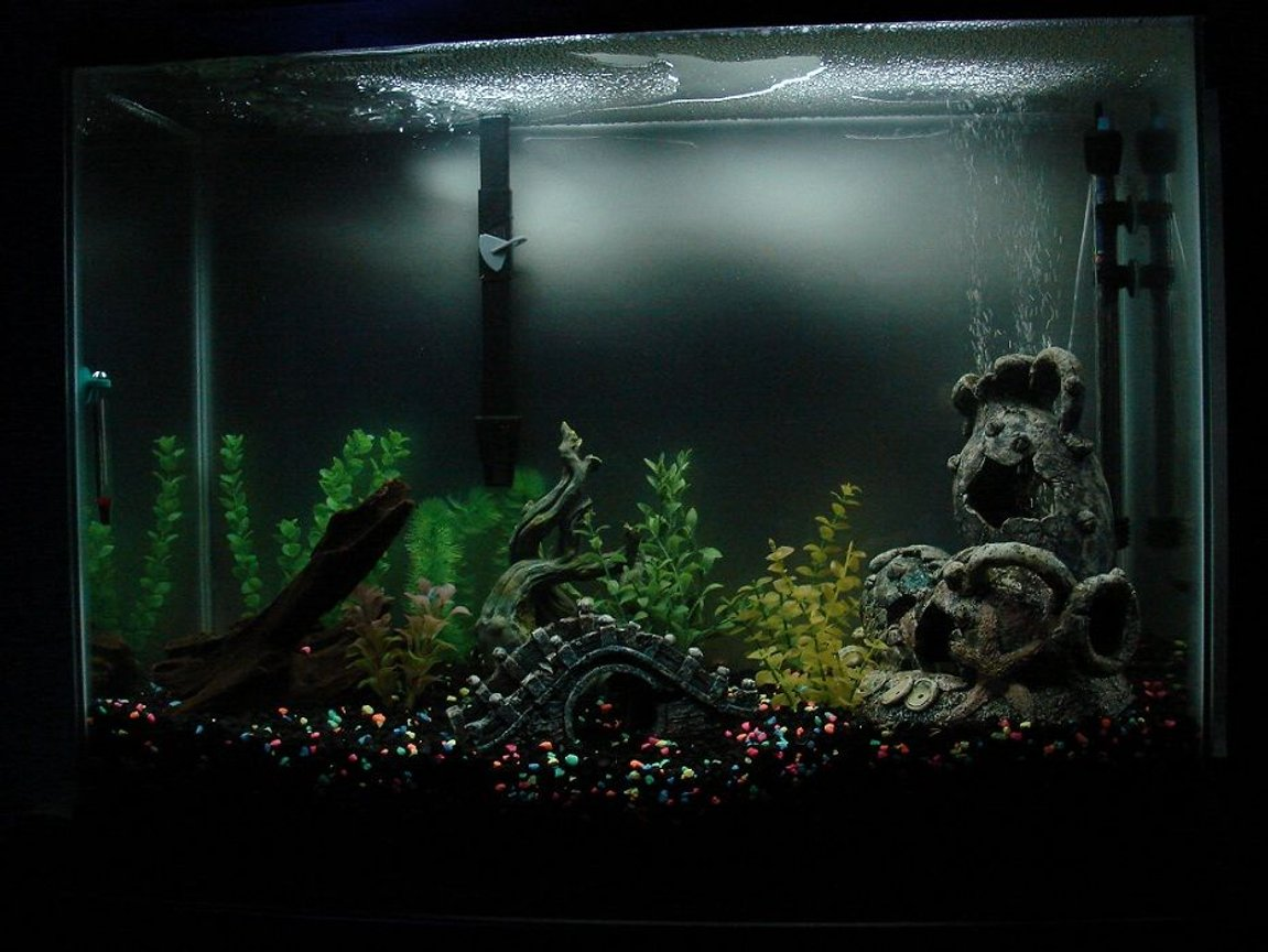fish tank picture - my 37gal tank, started about 2 weeks ago