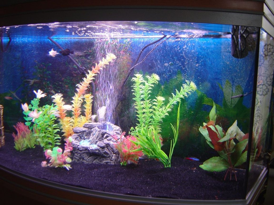 fish tank picture - Additional pic 6