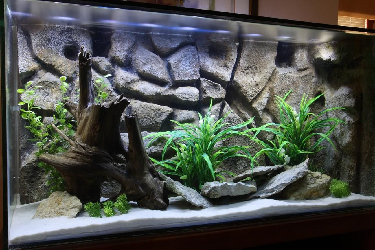 fish tank picture - 90 gallon completely home-made