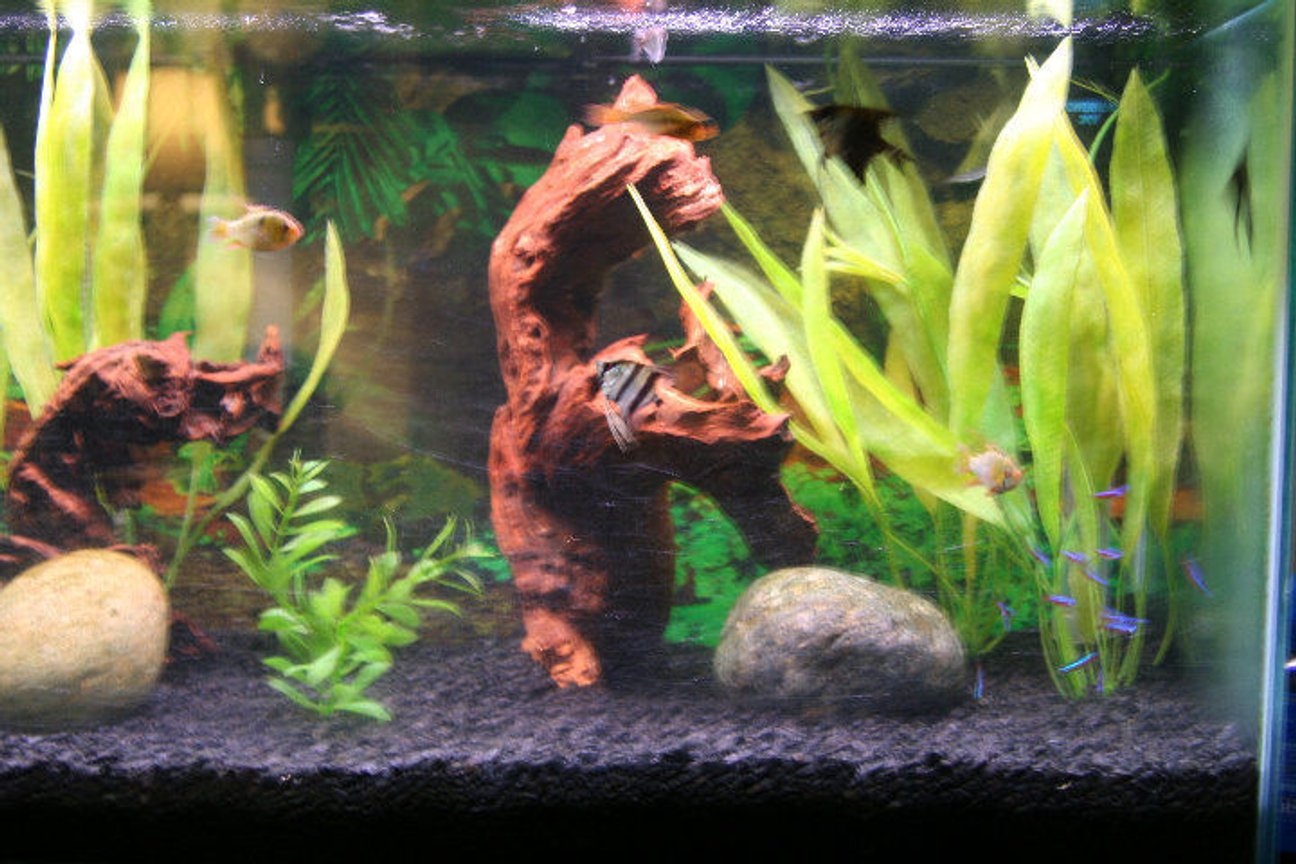 fish tank picture - close up on driftwood and fish