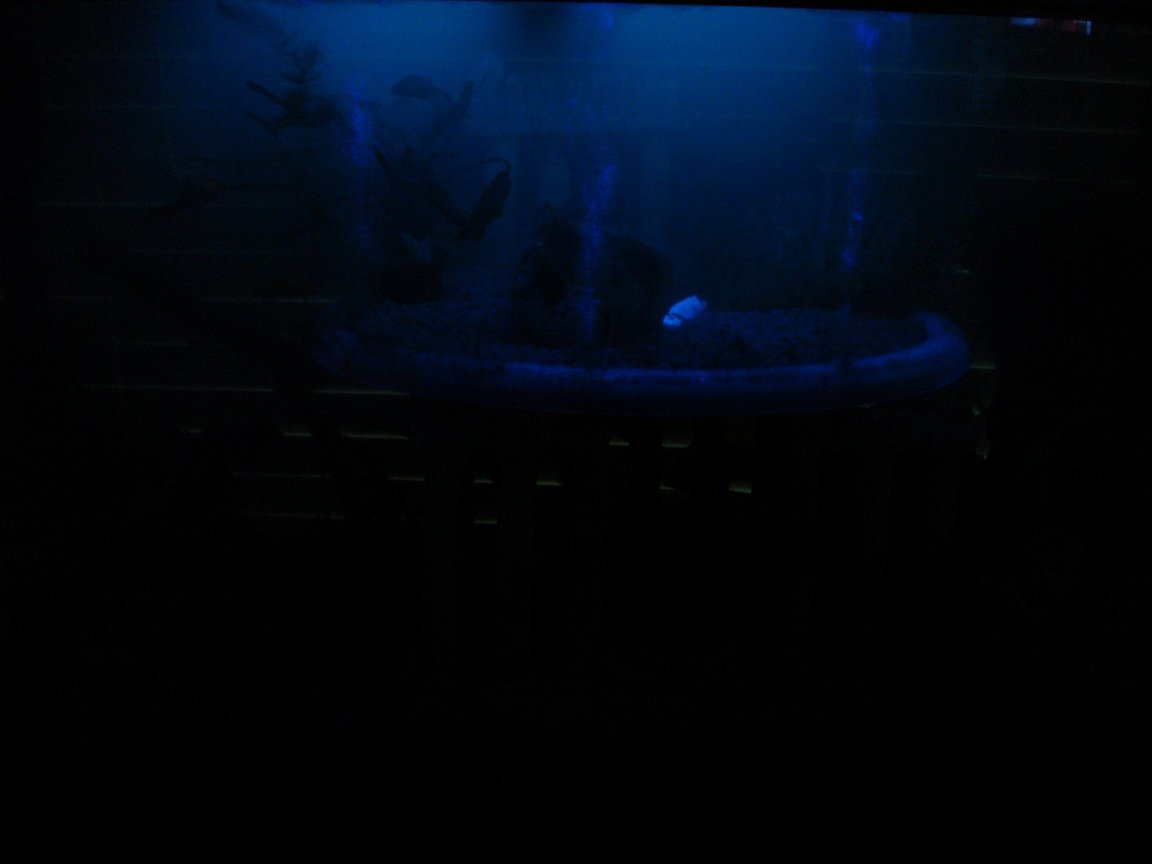 fish tank picture - black light only