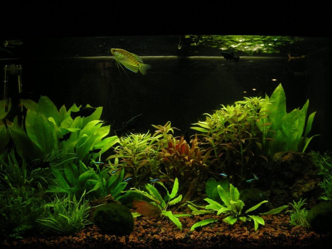 fish tank picture - pic4