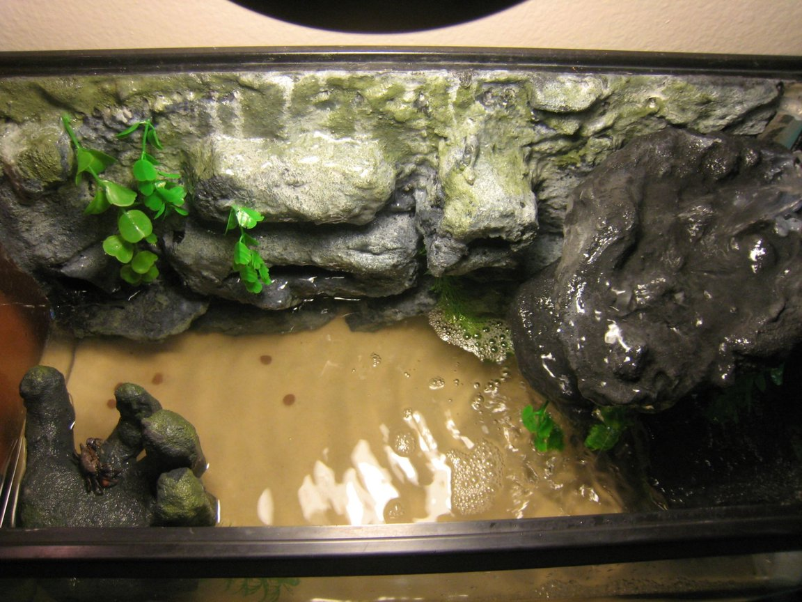 fish tank picture - Top shot