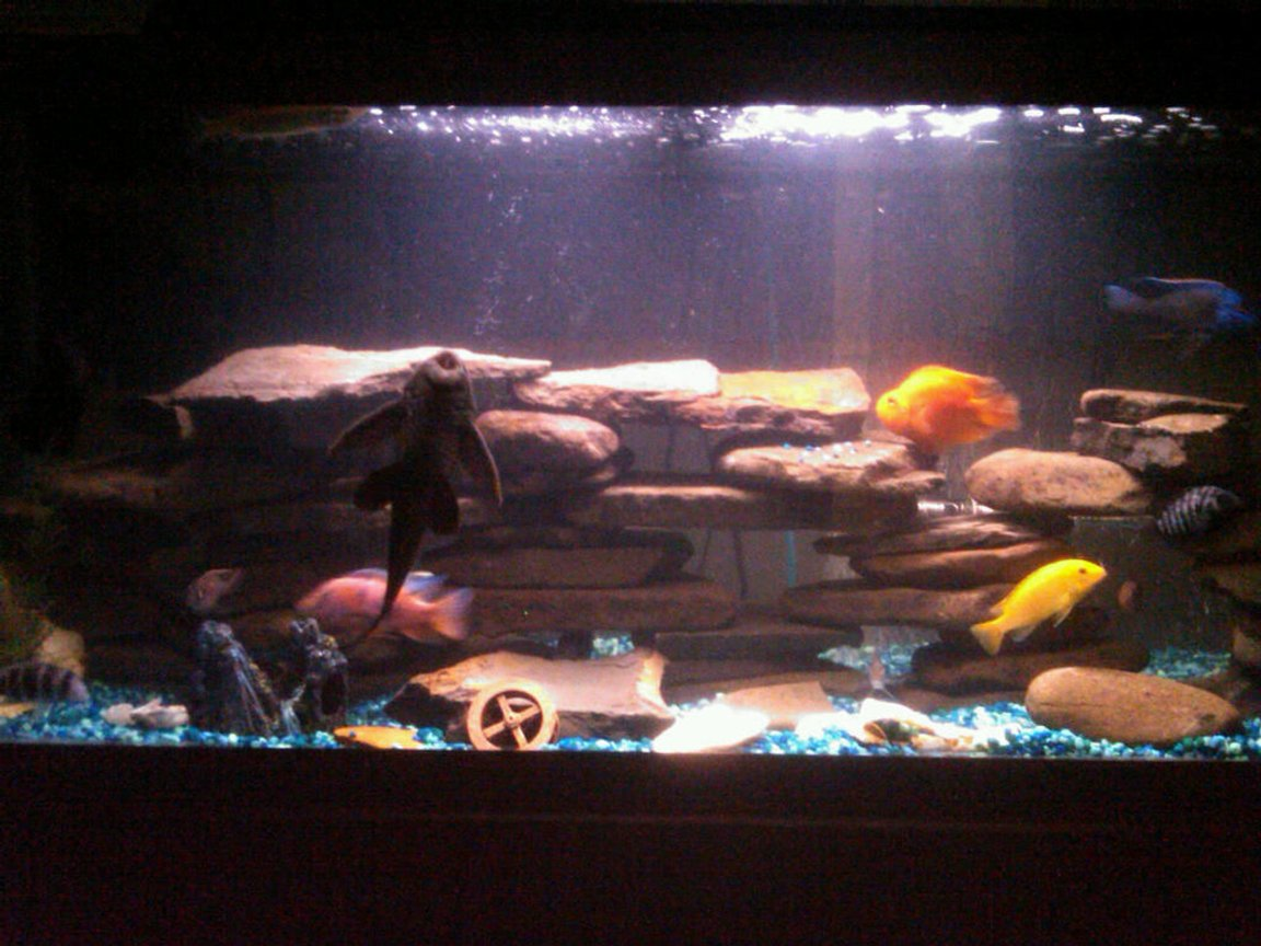fish tank picture - Night-time lighting.