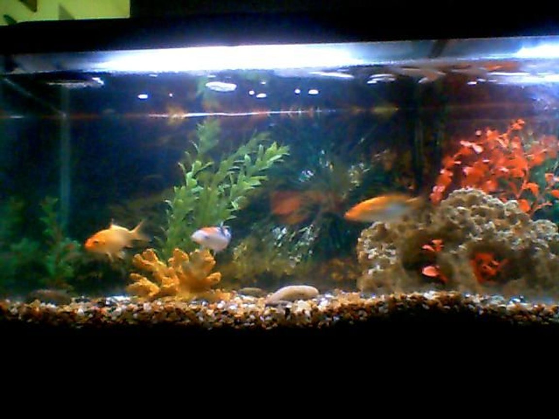 fish tank picture - different view