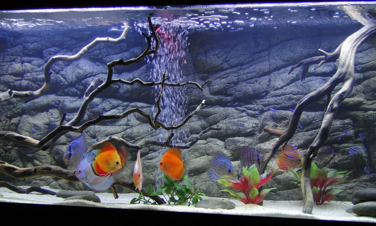 fish tank picture - The fish...