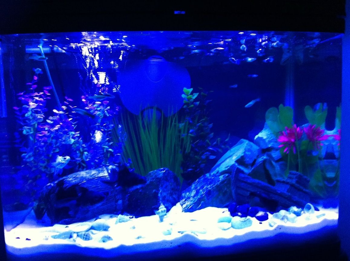 fish tank picture - mt tank marine blue bulb effect only