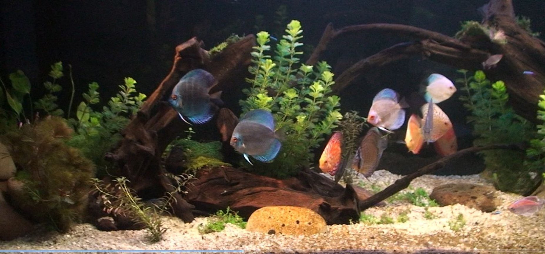 fish tank picture - Planted Discus tank 1