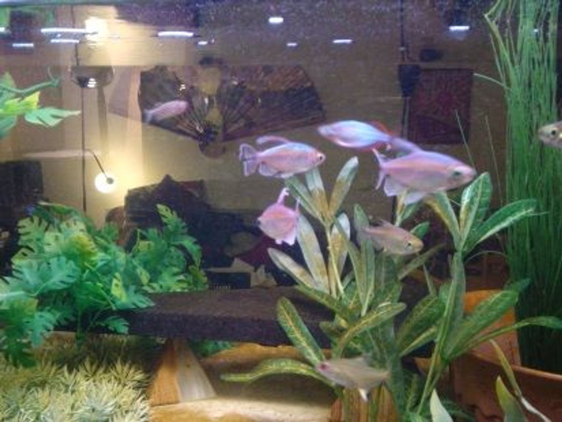 fish tank picture - how 'bout some congos?--these fish as well as the rope fish, eat from my hand