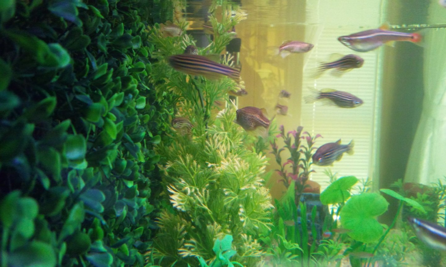 fish tank picture - Side shot....