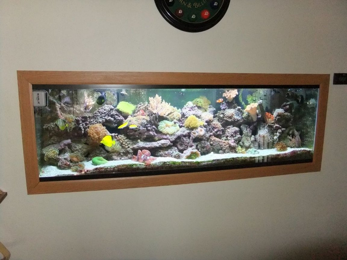 fish tank picture - Actual Pic of the tank inside the wall