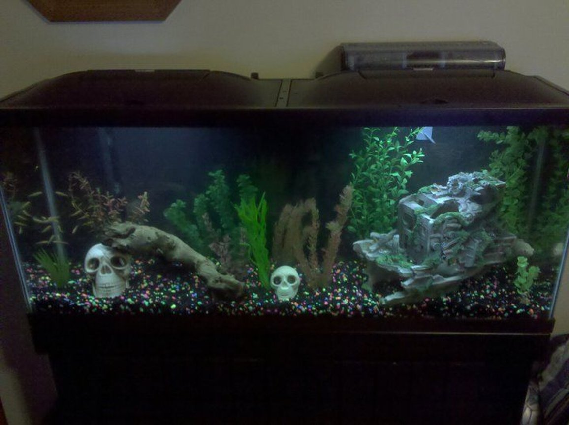 fish tank picture - They like the tank at night