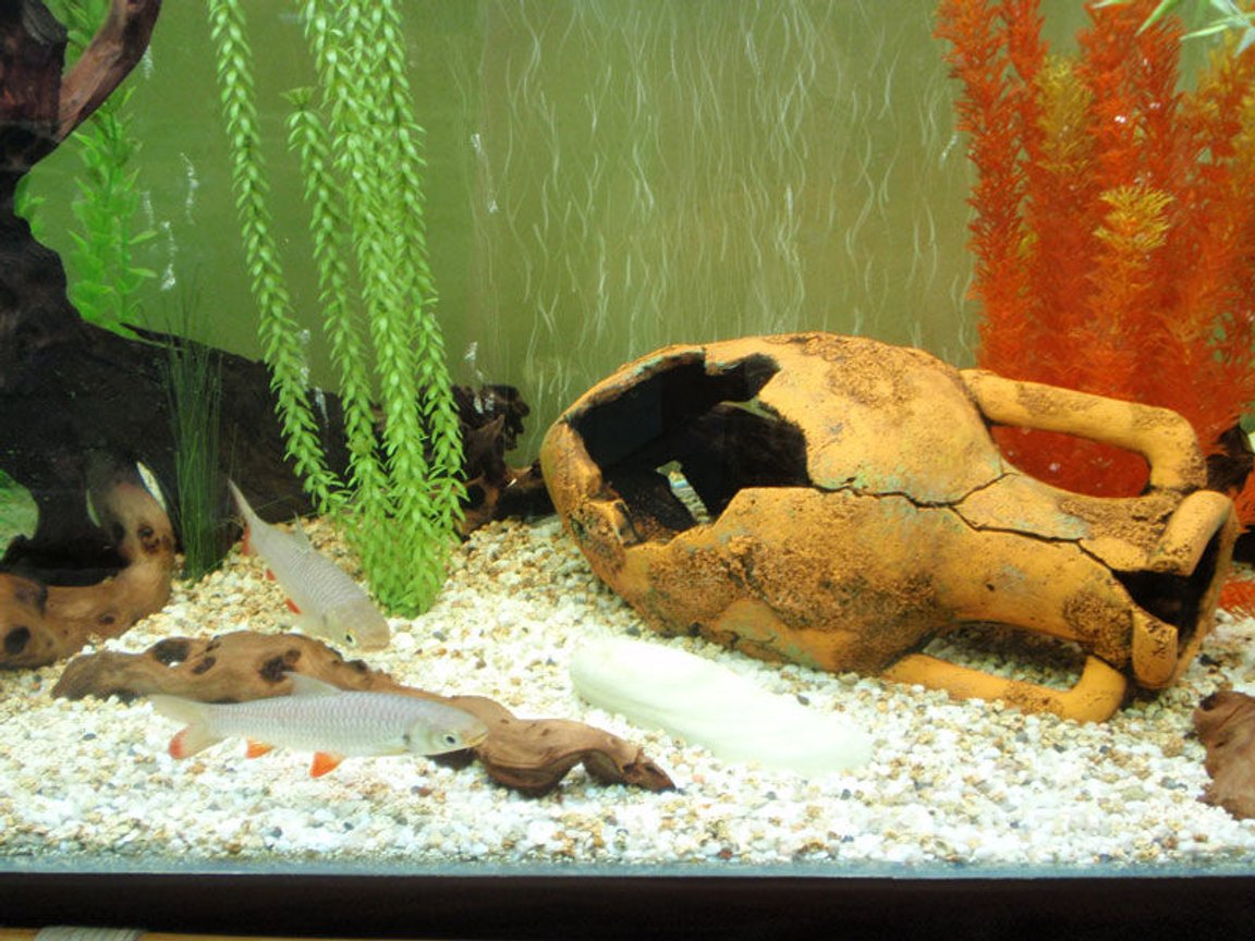 fish tank picture - center area was main reason for redecoration - more free swimming area and fish are very happy to have it